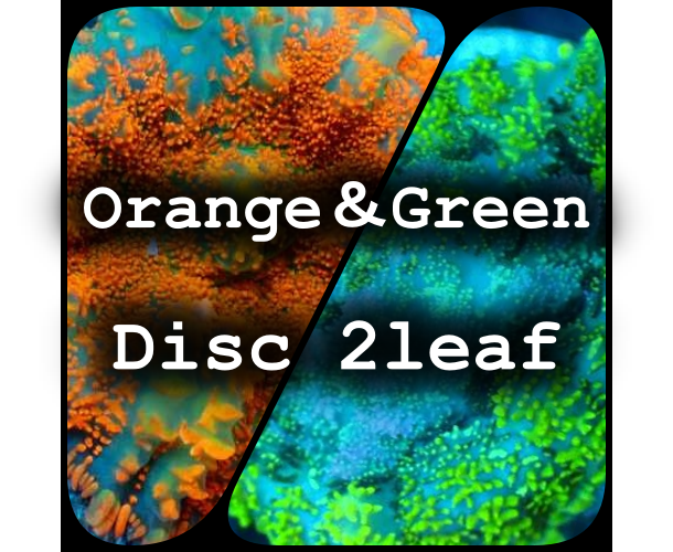 Orange&Green Disc Pack