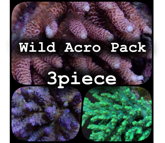 Wild Acro Pack 3piece
