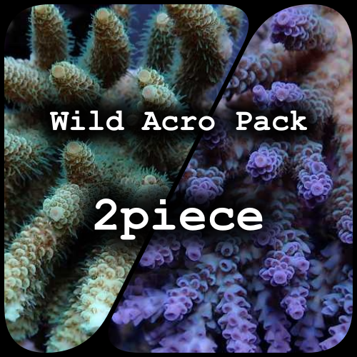 Wild Acro Pack 2piece